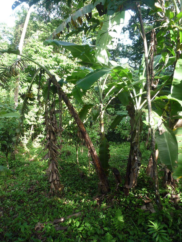 5 erstaunliche dinge ber bananen und eine anleitung zum for Boden im regenwald