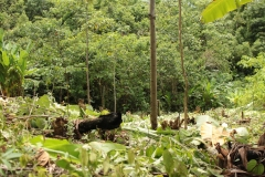 vorbereitung_pflanzung