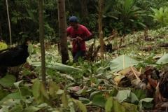 vorbereitung_pflanzung2