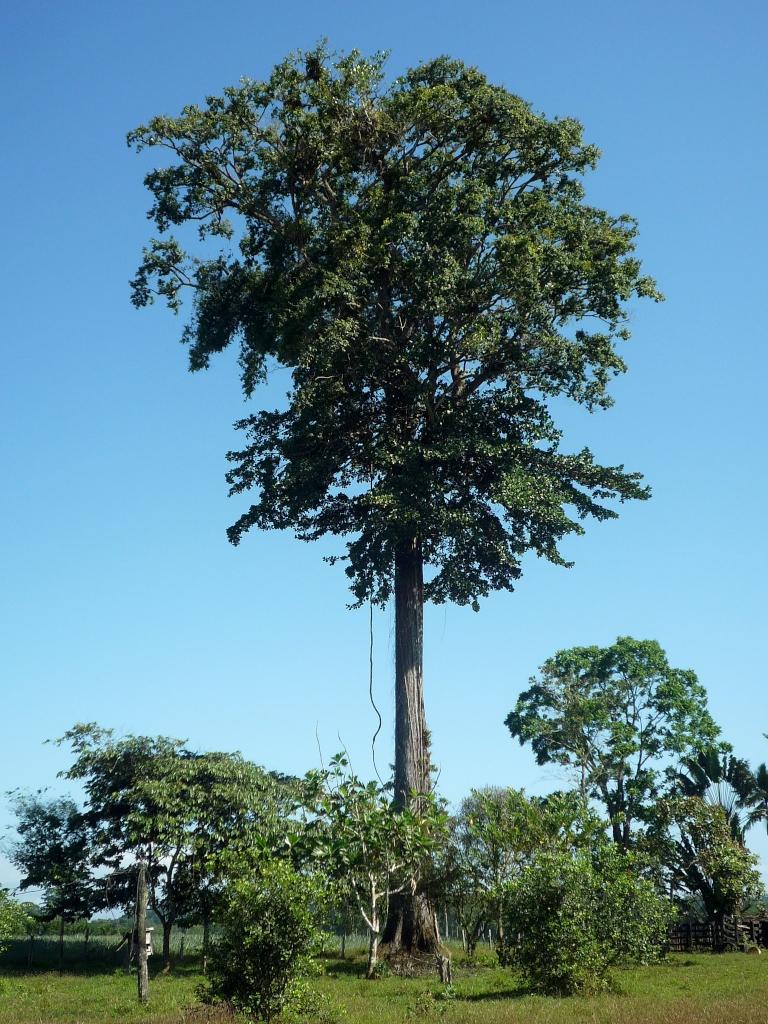 Affentopf baum regenwald baumpatenschaften ein for Boden im regenwald