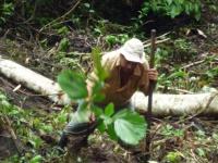 Beim Baumpflanzen