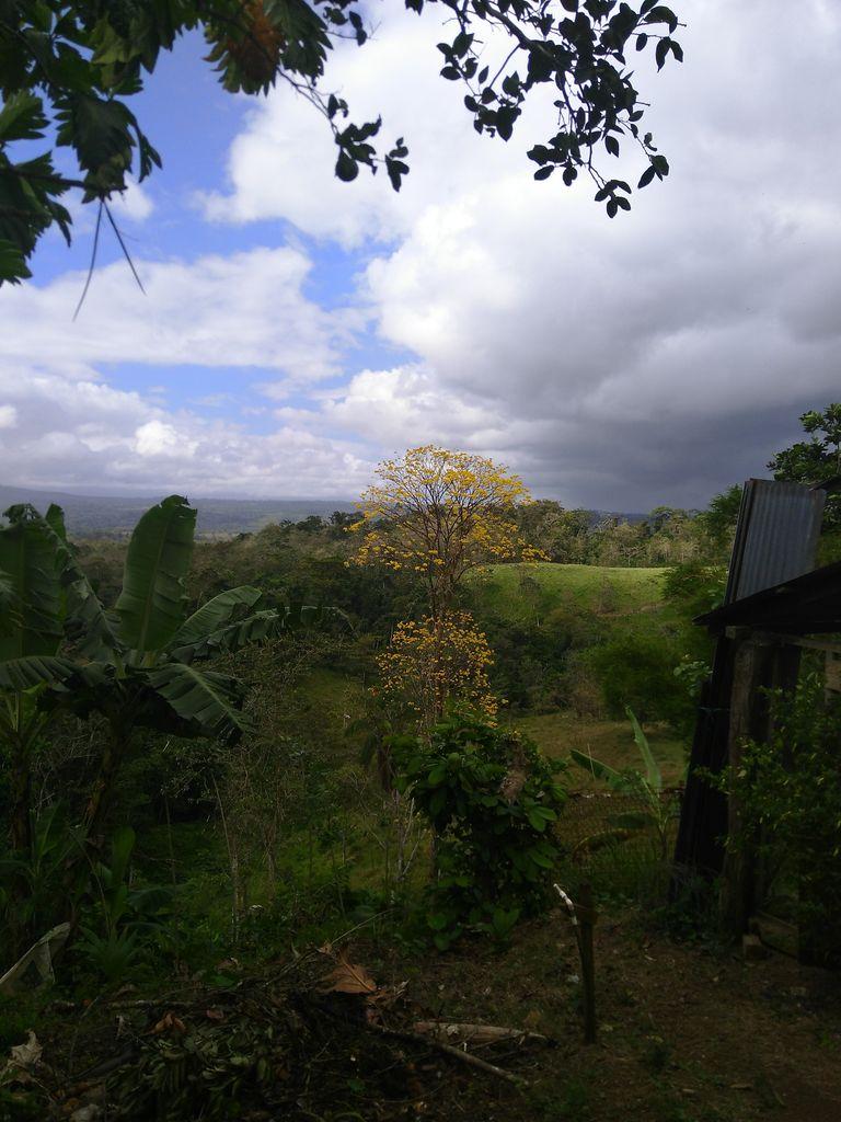 Guajakbaum