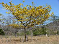 Corteza amarilla con flores