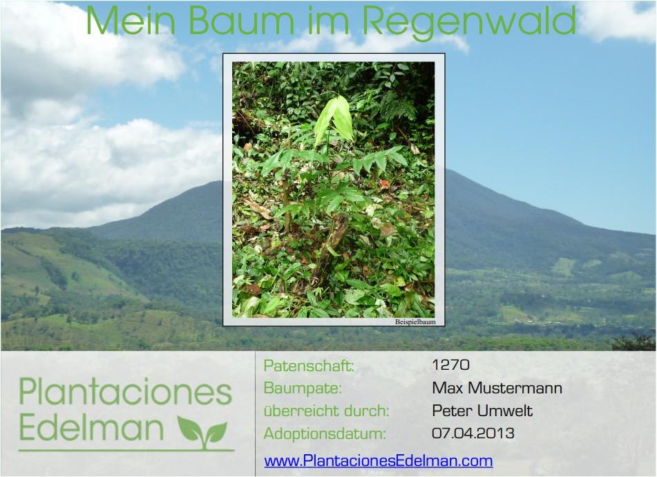 Urkunde Regenwaldbaum