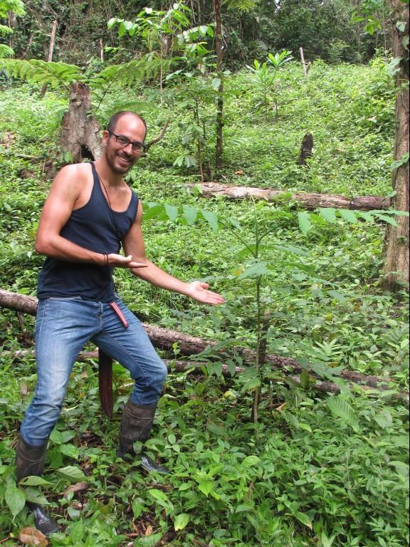 Baumpate mit seinem Geschenkbaum im Regenwald von Costa Rica