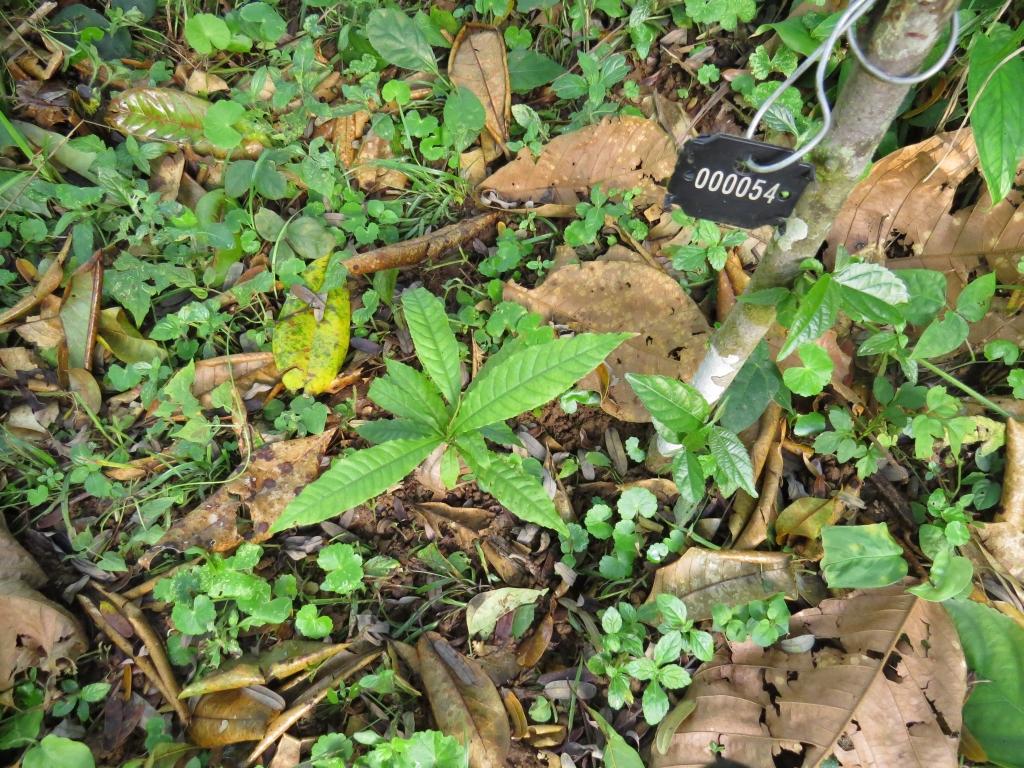 Baumplakette an Regenwald Setzling