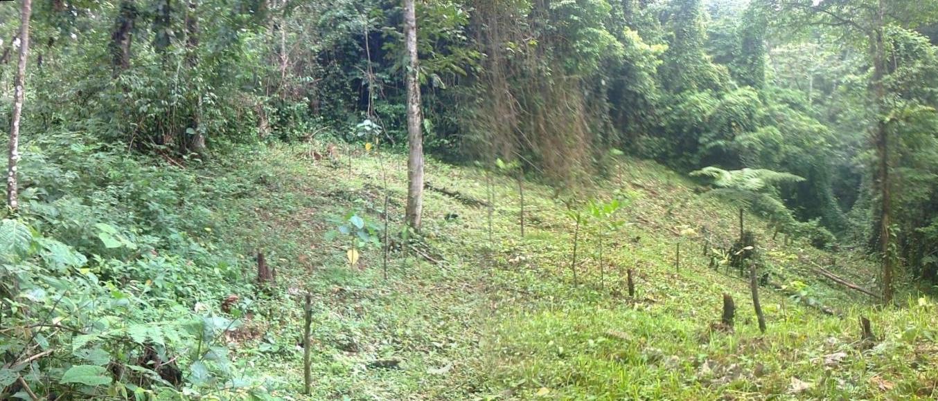 Übersicht einer jungen Wiederaufforstung in Costa Rica