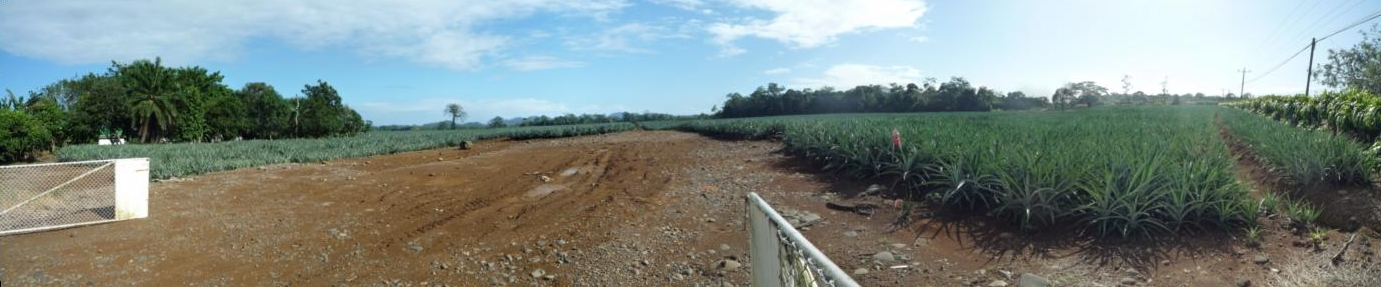 Ananasplantage bei Pital