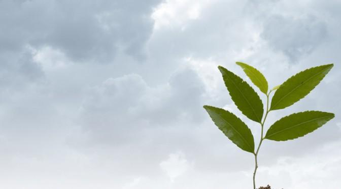 Sie wollen einen Baum verschenken und suchen den geeigneten Spruch?