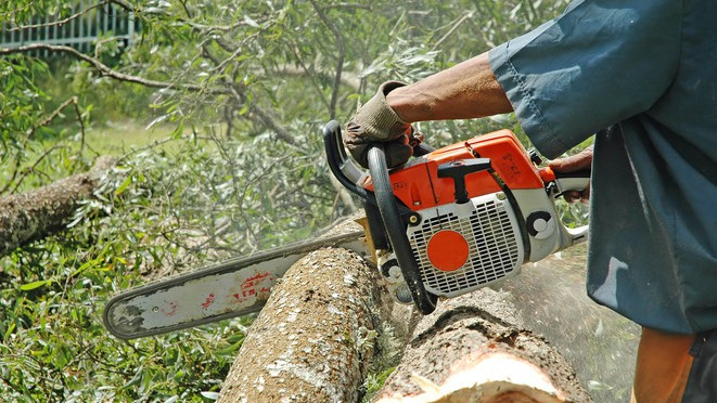 Waldzerstörung: Jeder Mensch zerstört 2 Bäume pro Jahr