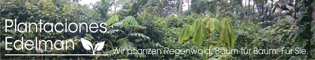 Regenwald Baumpatenschaften. Ein originelles Geschenk zur Taufe, Hochzeit, Weihnachten oder Geburtstag.