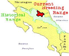 Ursprüngliches Siedlungsgebiet des großen Soldaten Aras in Costa Rica