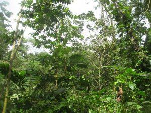 Diese Bäume wurden Ende 2011 gepflanzt.