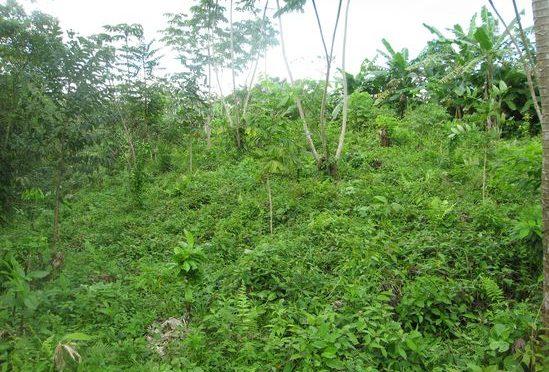 Video: Unsere Patenbäume im Regenwald von oben