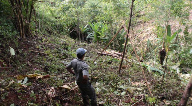 Plantaciones Edelman führt Schulung über großen Soldatenara und Wiederaufforstung durch