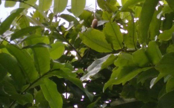 Videos: Der magische Waldmandelbaum
