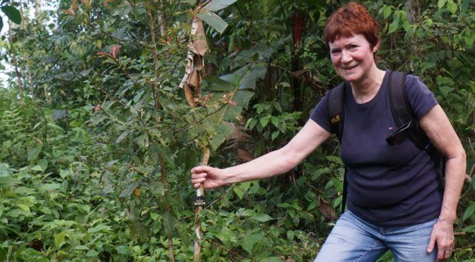 Baumpaten zu Besuch im neu entstehenden Regenwald