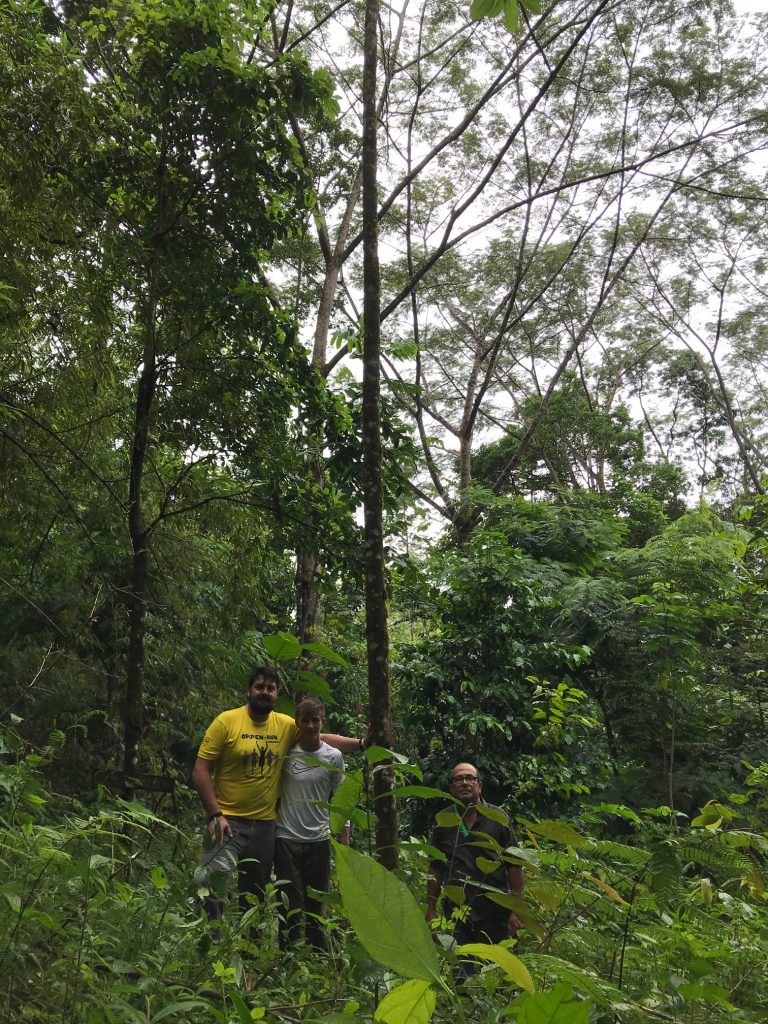 Besuch Regenwald Baum